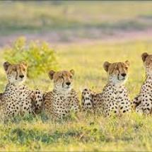 safari 1